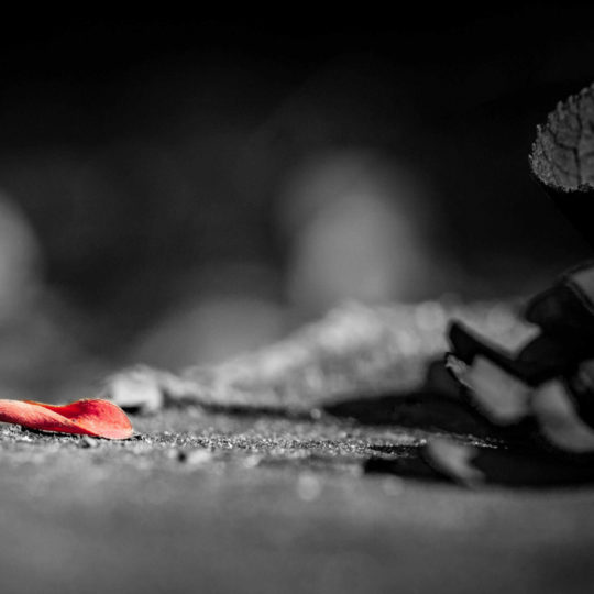 Red and black dead leaf monochrome cool Android SmartPhone Wallpaper