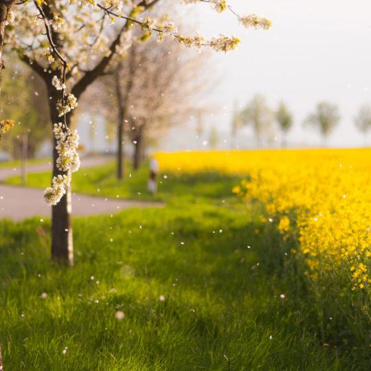 Scenery blur  flower ki green Android SmartPhone Wallpaper