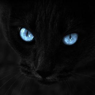 Cat black eye