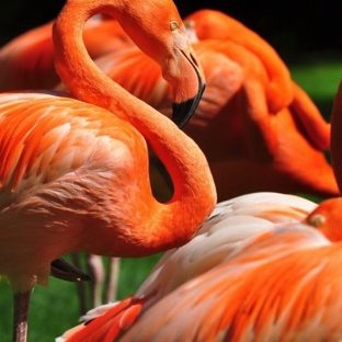 Animals Birds Apple Watch photo face Wallpaper