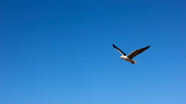 Animal bird sky Desktop PC / Mac Wallpaper