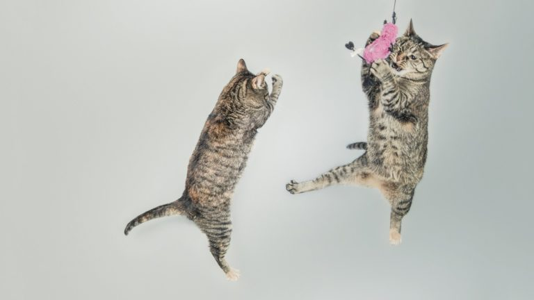 Animal cat jump Desktop PC / Mac Wallpaper