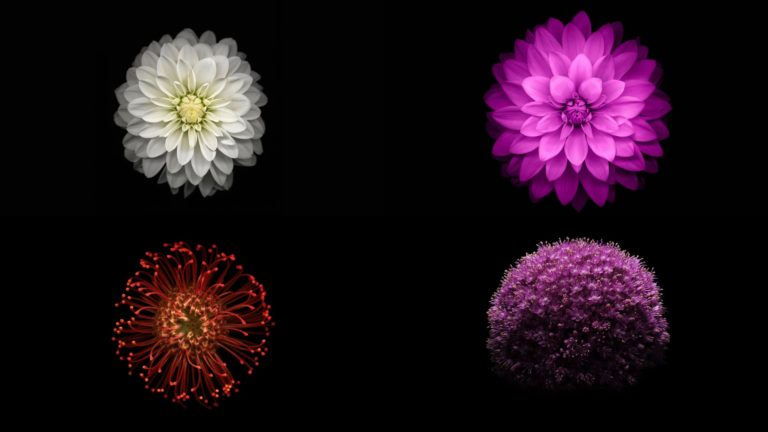 iOS9 flower image black cool Desktop PC / Mac Wallpaper