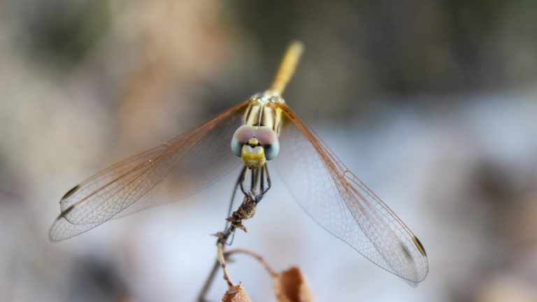 Landscape animal dragonfly Desktop PC / Mac Wallpaper