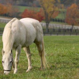Animal white horse iPad / Air / mini / Pro Wallpaper