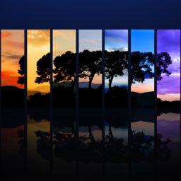 Cool tree iPad / Air / mini / Pro Wallpaper