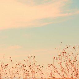 Landscape iPad / Air / mini / Pro Wallpaper
