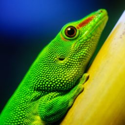 Animal green lizard iPad / Air / mini / Pro Wallpaper