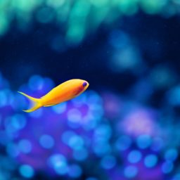 Animals Fish iPad / Air / mini / Pro Wallpaper