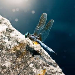 Animal dragonfly iPad / Air / mini / Pro Wallpaper
