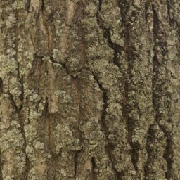 Tree moss green brown iPad / Air / mini / Pro Wallpaper