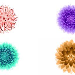 iOS9 flower image white Cool iPad / Air / mini / Pro Wallpaper