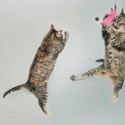 Animal cat jump iPad / Air / mini / Pro Wallpaper