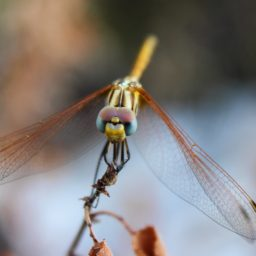 Landscape animal dragonfly iPad / Air / mini / Pro Wallpaper