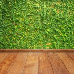 Green wall ivy floorboards iPad / Air / mini / Pro Wallpaper