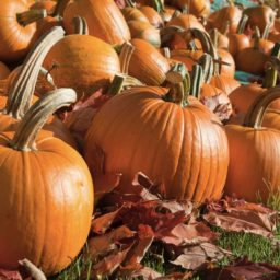 Pumpkin food orange iPad / Air / mini / Pro Wallpaper