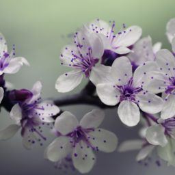 Plant flowers white purple iPad / Air / mini / Pro Wallpaper