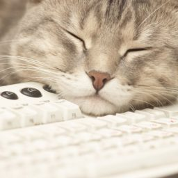 Cat keyboard for woman iPad / Air / mini / Pro Wallpaper
