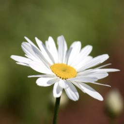 Plant flowers white iPad / Air / mini / Pro Wallpaper