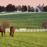 Landscape farm horse green