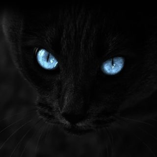 Black Cat Wallpaper Sc Iphone4s