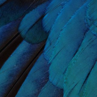 Pattern feathers blue green cool iOS9 iPhone4s Wallpaper