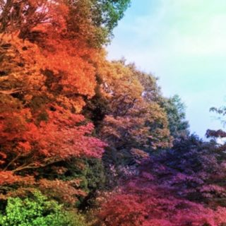 Autumn leaves colorful iPhone5s / iPhone5c / iPhone5 Wallpaper