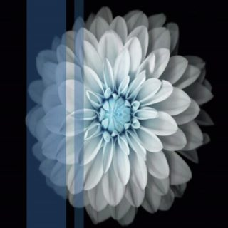 Flower white iPhone5s / iPhone5c / iPhone5 Wallpaper