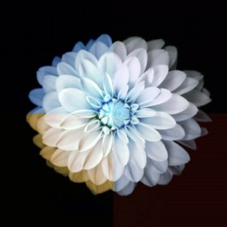 Flower Cool iPhone5s / iPhone5c / iPhone5 Wallpaper