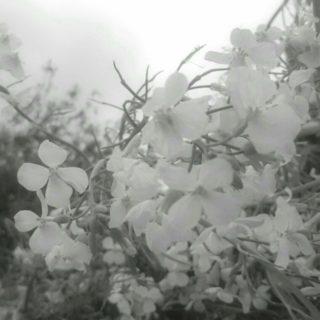 Flower Field iPhone5s / iPhone5c / iPhone5 Wallpaper