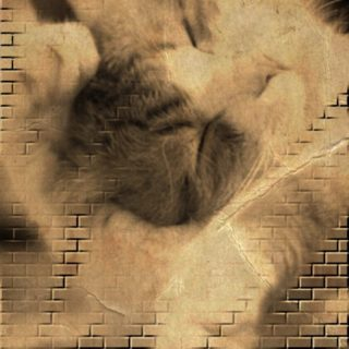 Cat brick iPhone5s / iPhone5c / iPhone5 Wallpaper