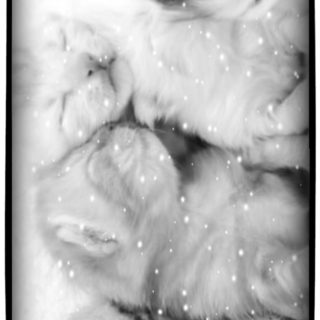 Cat snow iPhone5s / iPhone5c / iPhone5 Wallpaper