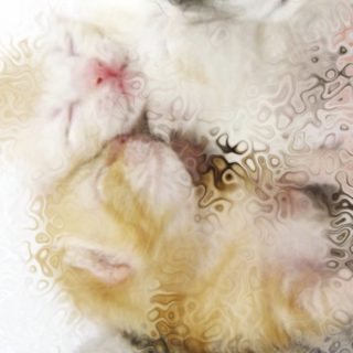 Cat family iPhone5s / iPhone5c / iPhone5 Wallpaper