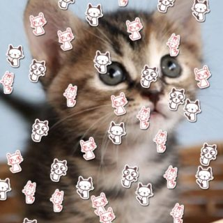 Cat illustration iPhone5s / iPhone5c / iPhone5 Wallpaper