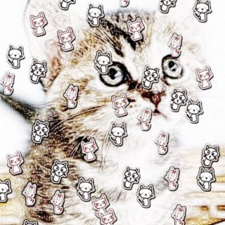 cat iPhone5s / iPhone5c / iPhone5 Wallpaper