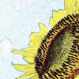 Sunflower Drawing iPhone5s / iPhone5c / iPhone5 Wallpaper