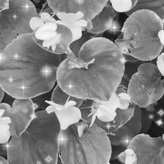 Flower black and white iPhone5s / iPhone5c / iPhone5 Wallpaper