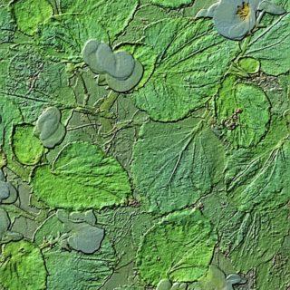Flower stone iPhone5s / iPhone5c / iPhone5 Wallpaper