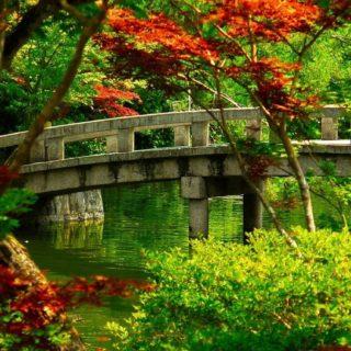 Landscape Hashi green iPhone5s / iPhone5c / iPhone5 Wallpaper