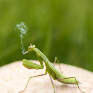 Mantis insect green blur iPhone5s / iPhone5c / iPhone5 Wallpaper