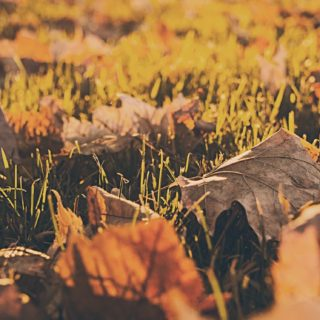 Landscape natural leaf iPhone5s / iPhone5c / iPhone5 Wallpaper
