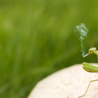 Insect praying mantis green blur iPhone5s / iPhone5c / iPhone5 Wallpaper