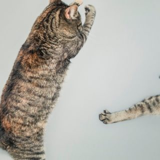 Animal cat jump iPhone5s / iPhone5c / iPhone5 Wallpaper