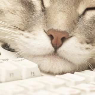 Cat keyboard for woman iPhone5s / iPhone5c / iPhone5 Wallpaper