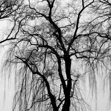 Landscape trees black and white iPhone6s / iPhone6 Wallpaper