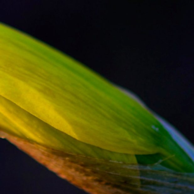 Leaf natural black green iPhone6s Plus / iPhone6 Plus Wallpaper