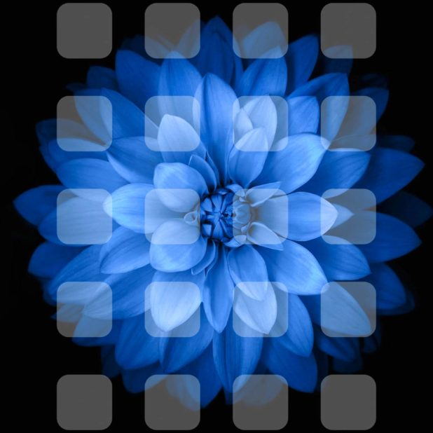 Blue black and white flower shelf iPhone6s Plus / iPhone6 Plus Wallpaper