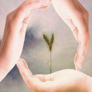 Hand Heart iPhone8 Wallpaper