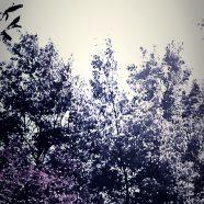 Trees Scenery iPhone8 Wallpaper