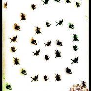 Fairy sparrow iPhone8 Wallpaper
